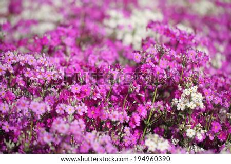 flower 9 - stock photo
