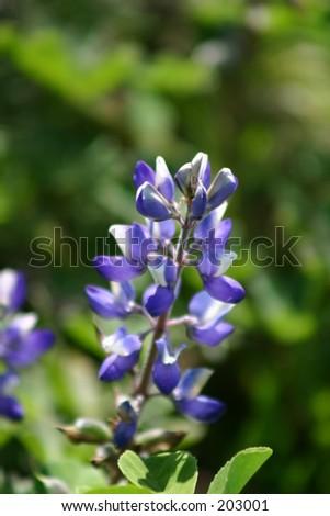 Flower. - stock photo