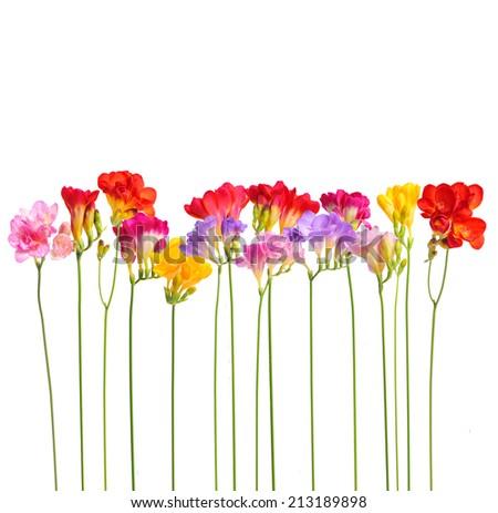 Flower - stock photo