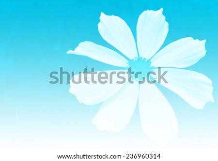 flower abstract background,cyan color tone - stock photo