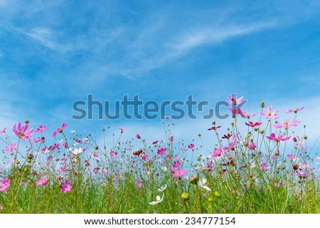 flower against blue sky - stock photo