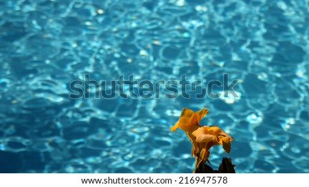 Flower Against Turquoise Water. Swimming Pool with Ripple Turquoise Water Background. - stock photo