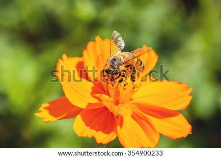 flower and bee in garden on day noon.