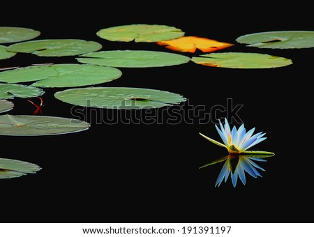 flower and lake
