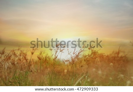 Flower and sunset background
