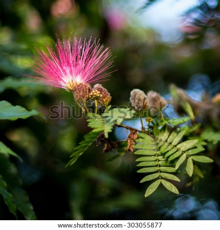 Flower at resort in Chit-wan National Park in Nepal
