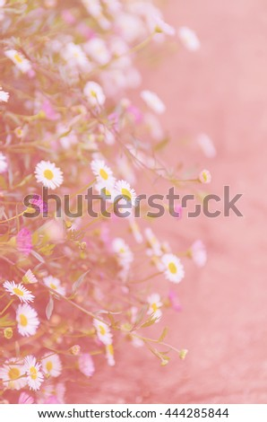 flower background. beautiful flowers made with color filters (out of focus) - stock photo