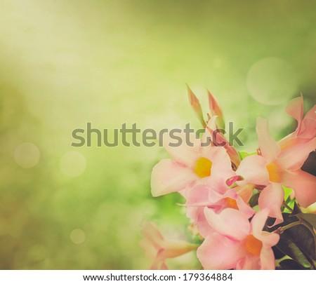 Flower background. Spring flowers border design. Spring blossom - stock photo