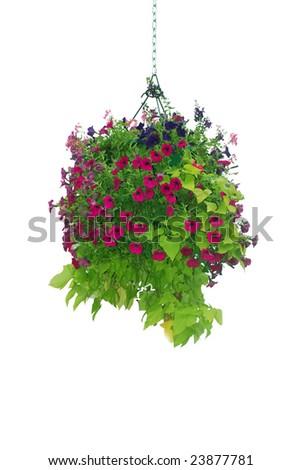 Flower basket hanging isolated - stock photo