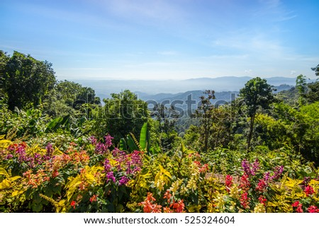 Flower bed forest mountain and blue sky background