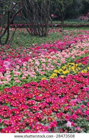 flower bed full of color flowers