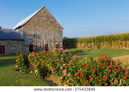 Flower bed of zinnias by an old barn