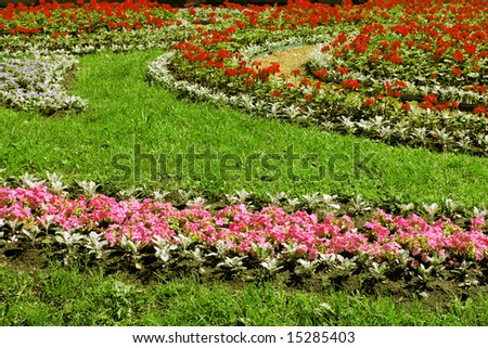 Flower bed with red and purple florets on a green grass