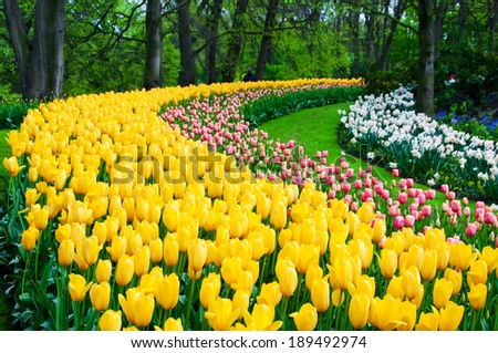Flower beds in Keukenhof park garden, Holland - stock photo