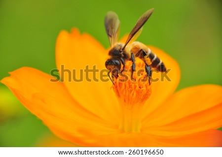 flower bee swarm - stock photo