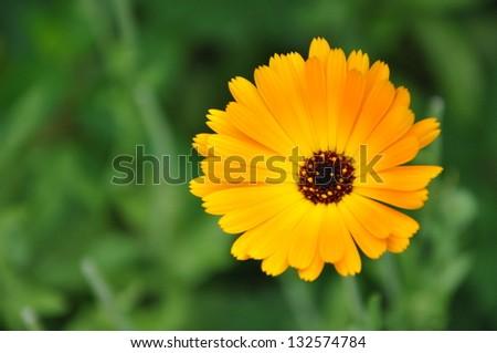 flower blossom in green - stock photo