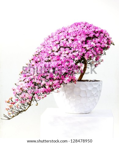 Flower Bonsai on the white background.