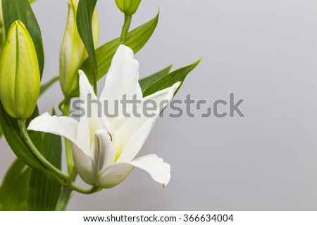 Flower bouquet decoration on the left side isolated on a grey background