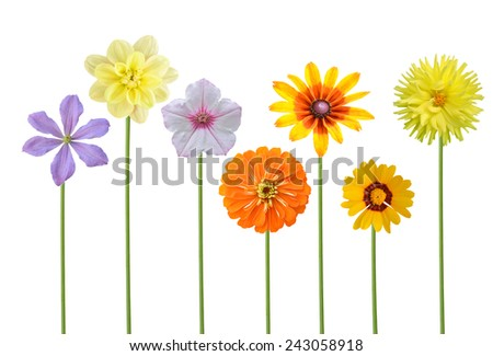 Flower branch: assorted on America colorful flowers - stock photo