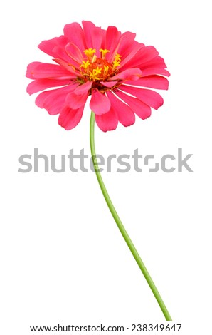 Flower branch: pink zinnia flowers