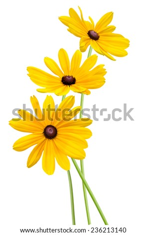 Flower branch: Yellow Black eyed susan flowers