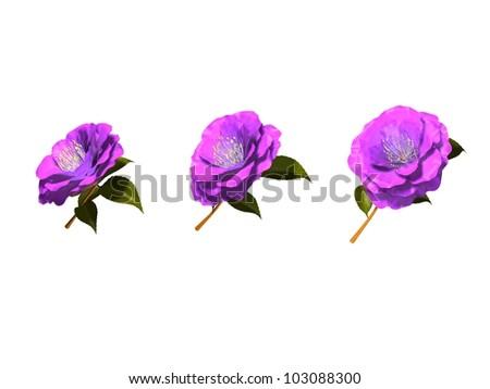 flower Camellia - stock photo