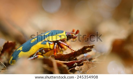 Flower chafers or flower scarabs (Cetoniinae) in terrarium
