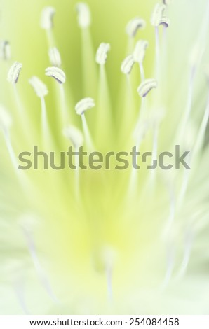 flower close up - stock photo