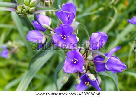 Flower Close-Up, Pink Flower, Purple Flower, Spring, Flowers, Purple, Close-up, Nature, Bloom, Garden Flower, Gardening, Blooming Flower, Blooming - stock photo