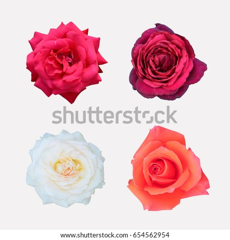 different color roses stock images royalty free images vectors shutterstock. Black Bedroom Furniture Sets. Home Design Ideas