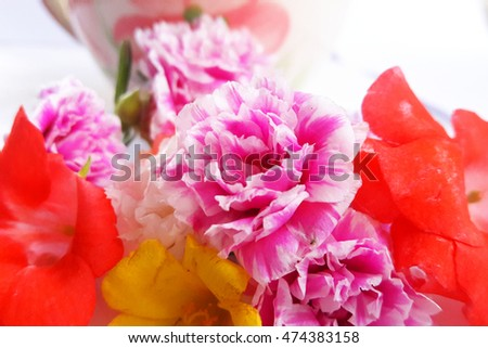 flower colorful love pink red