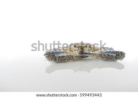 Flower Crab (Portunus pelagicius) over white background