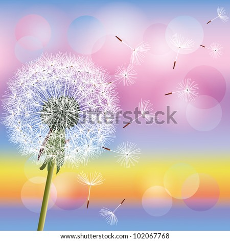 Flower dandelion on background of sunset. Spring nature background. Place for text