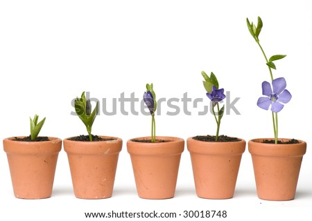 Flower development - stock photo