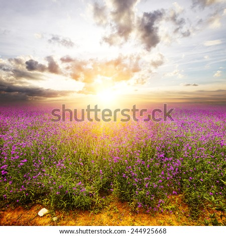 flower field and skyline during sunrise. - stock photo