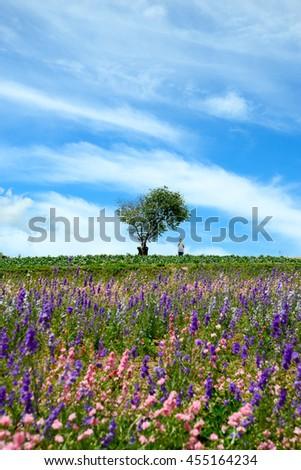 Flower field at Shikisai park (The Hill of Seasonal Colors), Biei, Hokkaido, Japan - stock photo