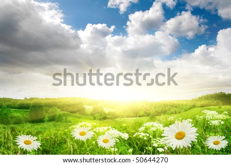 Flower field,blue sky and sun. - stock photo