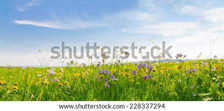 Flower field in spring time - stock photo