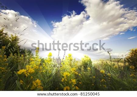flower field in summer - stock photo