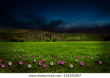 flower field in the night