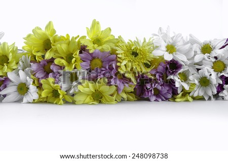 flower flora colorful - stock photo