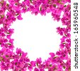 Flower frame, Pink blooming bougainvilleas isolate on white background - stock