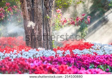 flower garden (cyclamen flowers) - stock photo