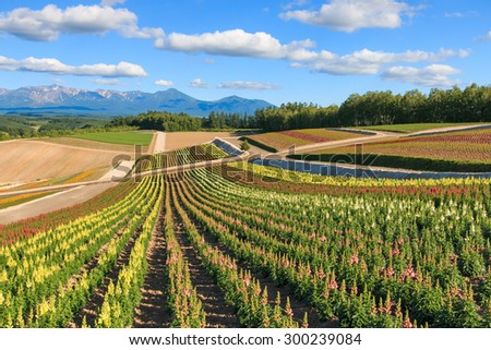 Flower garden in Kamifurano, with mountain view in Furano, Hokkaido Japan