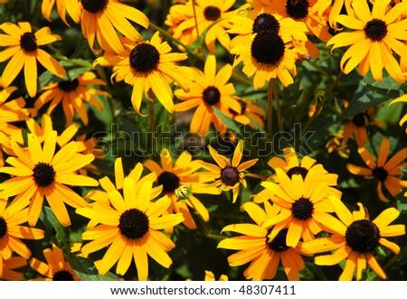 flower gardens - stock photo