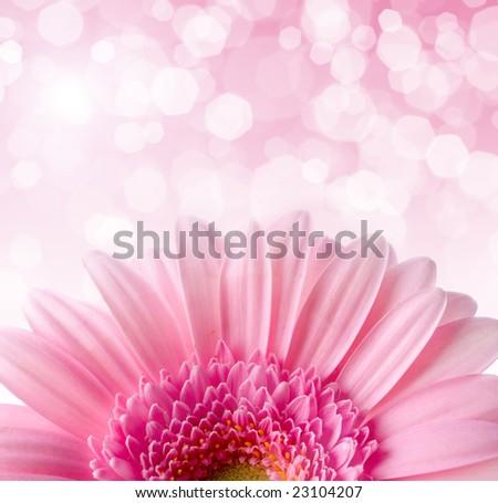 Flower Gerbera - stock photo