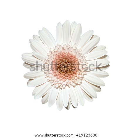 Flower,Gerbera, Barberton daisy:Gerbera jamesonii (Compositae),isolated on white background, with clipping path - stock photo