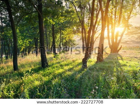 Flower glade in the forest at sunrise - stock photo