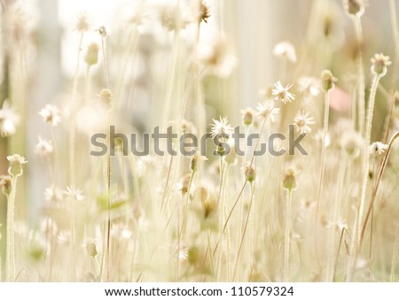 flower grass at relax morning time - stock photo