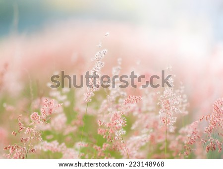 Flower grass at relax time and defocused background - stock photo